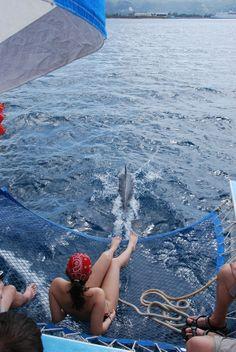 Delphinsichtung vor Jamaika