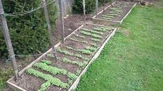 Zöldtrágya vetés, ázalék készítés, növényvédelem és növénytársítás - minden ami a pet palackos paradicsom palánták kiültetéséhez szükséges