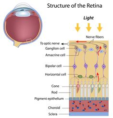 geographic atrophy Macular Degeneration Symptoms, Alport Syndrome, Cone Cell, Diabetic Retinopathy, Nerve Fiber, Optic Nerve, The Retina, Healthy Eyes, Alternative Treatments