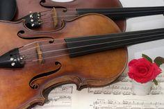 Viola, violino, flauto traverso e rosa