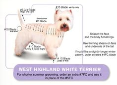 Westie Grooming Chart | westie kit groom your westie like a professional we also recommend the ...