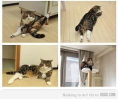 cat being cat..