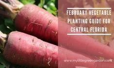 What to Plant in February in Central Florida - My Little Green Garden | 1004