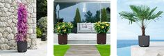 Lechuza offers self watering planters which makes it easy to enjoy beautiful plants without a lot of work  www.lechuza.us