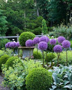 """731 mentions J'aime, 21 commentaires - Gardens at First Light (@gardensatfirstlight) sur Instagram : """"Allium perfection. Always pretty pocket garden featured in my first book, In the Garden.…"""""""