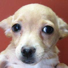 """""""Einstein"""": Dog Adoption San Diego - Adopt A Dog   Cat Adoption San Diego - Adopt A Cat   Helen Woodward Animal Center"""