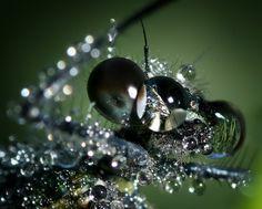 "dragonfly""s head"