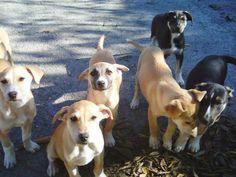 Ohana-Dog_Blog: Randagini in attesa di adozione