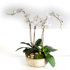 2385 Orchids in Aged Bowl 19x25
