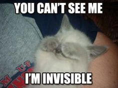 I canread you like a magazine. invisible kitteh