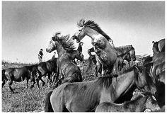 Horse of Atienza, Guadalajara, Spain, Rafael Sanz Lobato photography. Garcia Alix, Spanish Eyes, Blog Fotografia, Cecil Beaton, Photo Report, Man Ray, Lion Sculpture, Horses, Culture