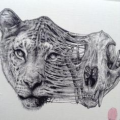 animal-skull-drawings-paul-jackson-tiger