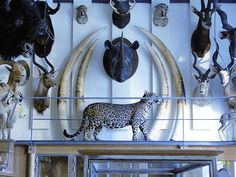 Hôtel de Mongelas - Musée de la chasse et de la nature