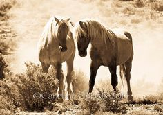 Wild Horse Photo from the Sand Wash Basin by CarolineChristieArt