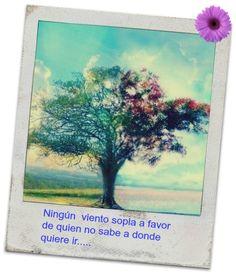 Y saber a donde quieres ir.... #estoyenel3 #yvolveraempezar #nuncaestarde