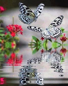 beautiful butterfly reflection ❤`