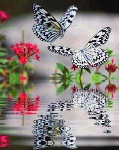 beautiful butterfly reflection
