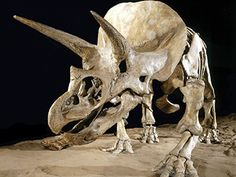 Walk among one of the largest collections of dinosaur skeletons in the world, in the Royal Tyrrell Museum Dinosaur Hall. Berlin, All Dinosaurs, Dinosaur Pictures, Dinosaur Skeleton, Natural History Museum, Prehistoric Creatures, Tyrannosaurus Rex, Museum Exhibition, Drumheller Alberta