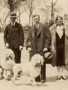 Bred to retrieve waterfoul in frigid german waters, the Standard Poodle's fussy haircut kept him afloat, while protecting his joints, head, and ears.  A very energetic sporting dog. (Picture from Boston Park, 1928)