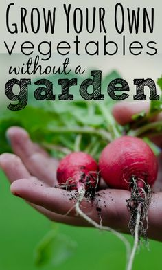 Can you grow your own vegetables without a garden? It really is possible and there are a number of options to try that are all easy to do.