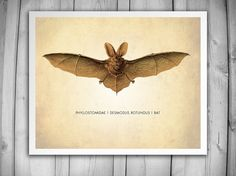 BAT ART PRINT  Scientific Art Print  Vintage by theNATIONALanthem, $6.00