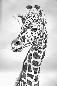 Giraffe drawing …
