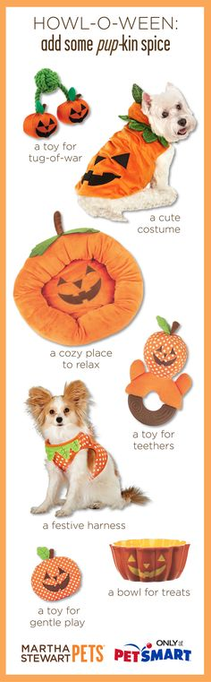 Add some #pupkin spice to your dog's life with some #marthastewartpets #halloween products! #petsmart #petcare #halloween #costume #pumpkin