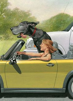 Favorite things- Danes and convertibles!   by: C F Payne- Highway Patrol