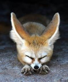 434 best images about Foxes on Pinterest | Wildlife photography ...