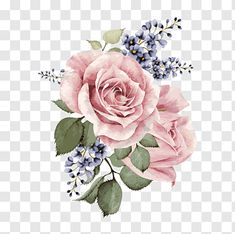 PNG WEBSITE FOR WEDDINGS Centifolia roses Garden roses Floral design Pink Cut flowers, Hand-painted watercolor flower, pink rose flowers illustration free png White Rose Flower, Pink Flowers, Cut Flowers, Pink Roses, Watercolor Leaves, Watercolor Rose, Watercolor Painting, Rose Illustration, Rosa Rose