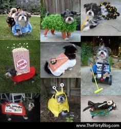 Perros con disfraces para Halloween