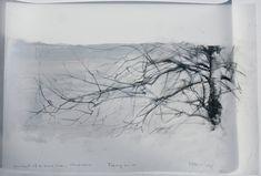 Portrait of a Birch Tree, Marsh Farm. Drawing 62-09, graphite & oil on mylar, 30 x 50 cm./ by Laurie Steen