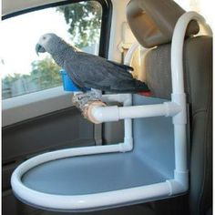 Hahahaha this is brilliant! Have pvc will travel! Get a Parrot Car Seat and take you feathered friend on vacation! Just hang this parrot car seat over the headrest on most car makes and get out on the road.
