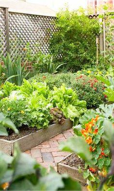 erhöhte Gemüsebeete