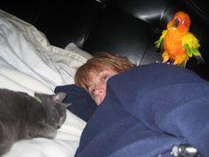 Animal sympathy while sick