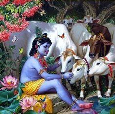 Krishna petting calves