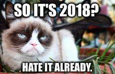 The 18 best ever grumpy cat memes. Grumpy Cat Quotes, Grumpy Cat Humor, Funny Cat Memes, Hilarious, Grumpy Kitty, Kitty Kitty, Animal Quotes, Animal Memes, Animal Humor