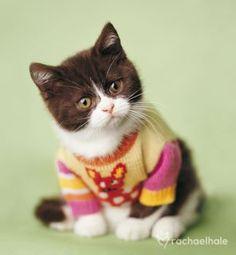 Kitten in a sweater!