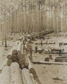 Lumber trade in Nacogdoches, Texas 1899.