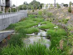 Thornton Creek Water Quality Channel, 08.2009 | by SvR Design Co