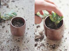 Saber cómo trasplantar las suculentas es necesario pues son plantas que crecen bastante deprisa y además que podemos reproducir fácilmente por esquejes. Si nunca has hecho esta operación puede que …