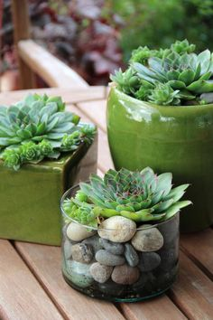 Succulents are extremely low-maintenance. They are easy to grow. They prefer a snug pot anyway, so they do not need a lot of extra room.  If you ...
