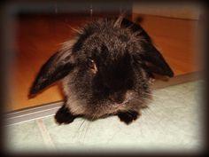 Artur Animals, Animales, Animaux, Animal Memes, Animal, Animais, Dieren