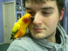 Awww...Sun Conures are the CUTEST!...video