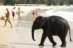 Thailand: which beach is right for you? - travel tips and articles - Lonely Planet  I want to go to a beach with elephants.