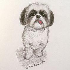 Shih Tzu illustration @bendomorph drew this beautiful portrait of me Thank you…