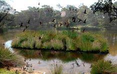 Floating Gardens / Floating Wetlands - Fytogreen Australia Water Me, Deep Water, Water Flow, Human Traffic, Floating Garden, Hydroponics, Habitats, Pond, Gardens