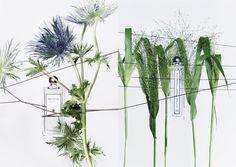 Série Parfums. Direction Artistique. Photos Christophe Bouquet. Stylisme Thérèse Verrat. Agence Glow Paris.