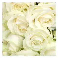 20 Luxury White Roses ($59) ❤ liked on Polyvore featuring backgrounds