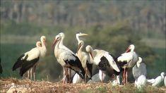 Information About Birds, Stork, Animals, Animales, Animaux, Animal Memes, Animal, Animais, Dieren